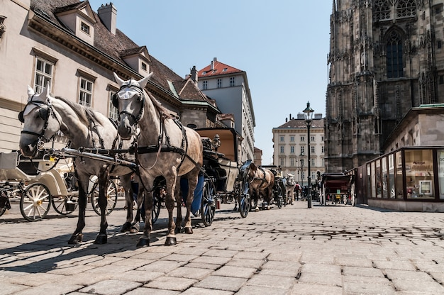 Horses carriage cathedral vienna