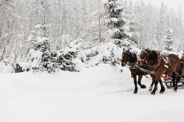 Horses carrying sledge in winter