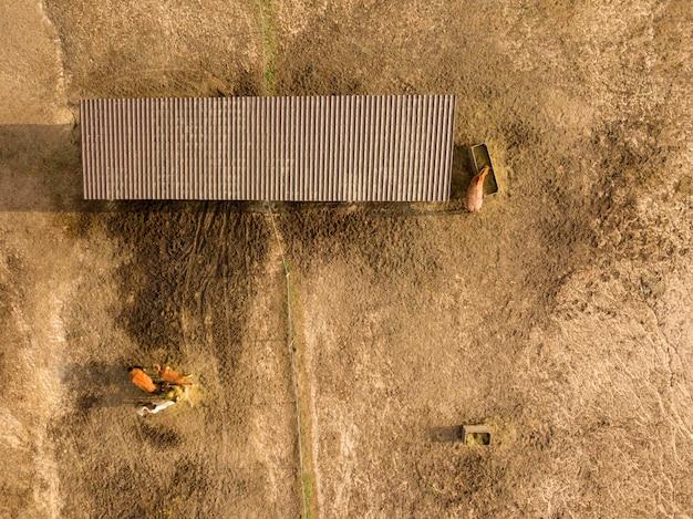 馬は夏の日に農場の木箱から新鮮な干し草を食べます。ドローンからの空撮