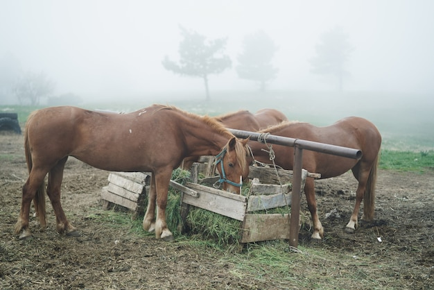 Horses eat grass at the farm