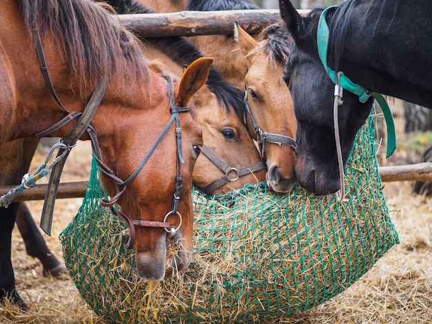 Horses eat hay from a mesh feeder