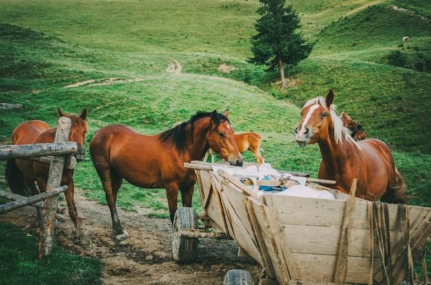 山のカートから食べる馬