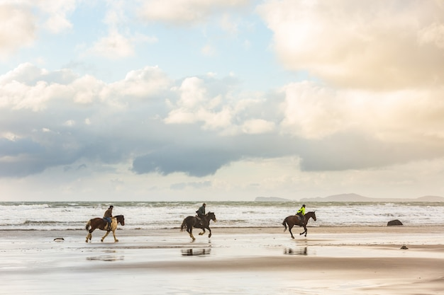 Horses at gallop on the beach at sunset