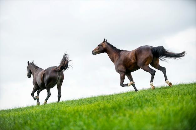 Лошади скачут по полю