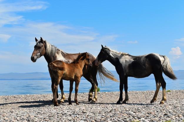 馬は湖の岸に沿って放牧します