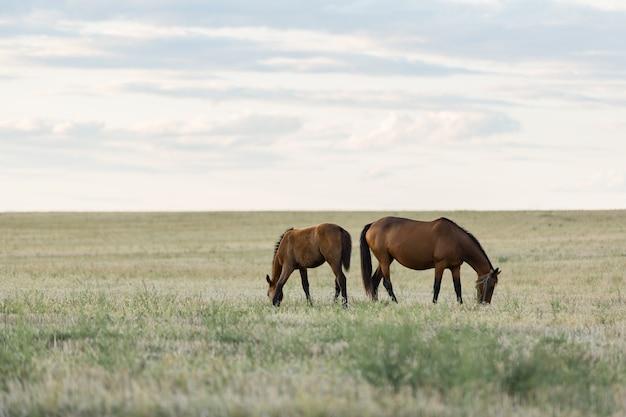 Лошади пасутся в красивом поле