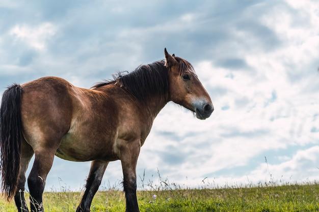 自由に放牧し、歩き回る馬