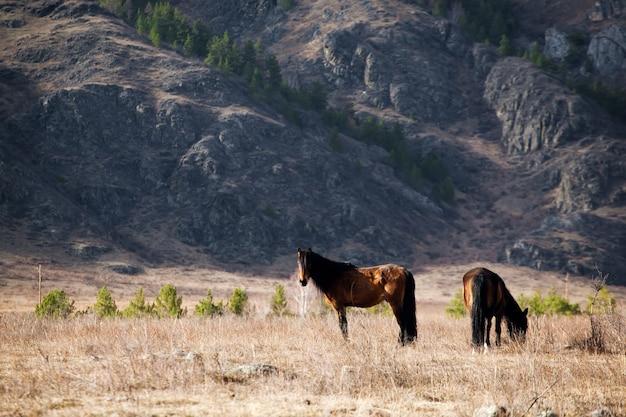 山で自由を放牧している馬