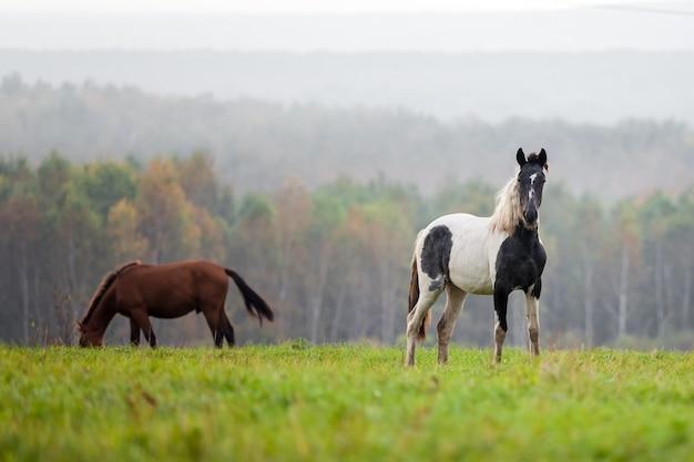 Лошади, пасущиеся на лугу осенью