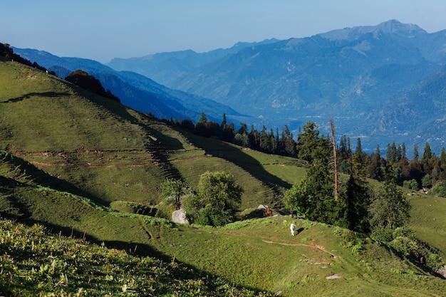 ヒマラヤ山脈で放牧する馬