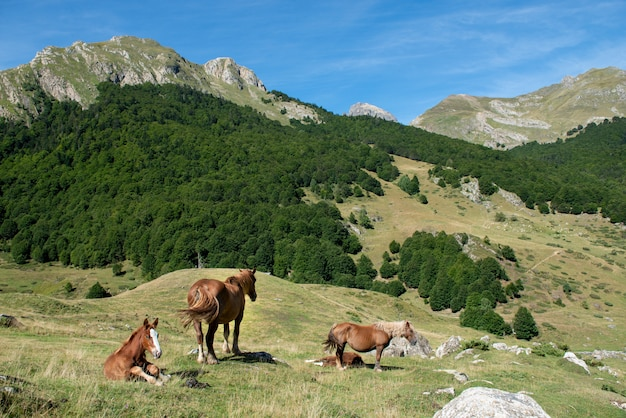 Horses grazing in the pasture at mountains