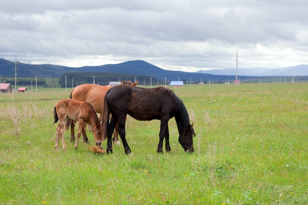 Horses grazing on the ranch