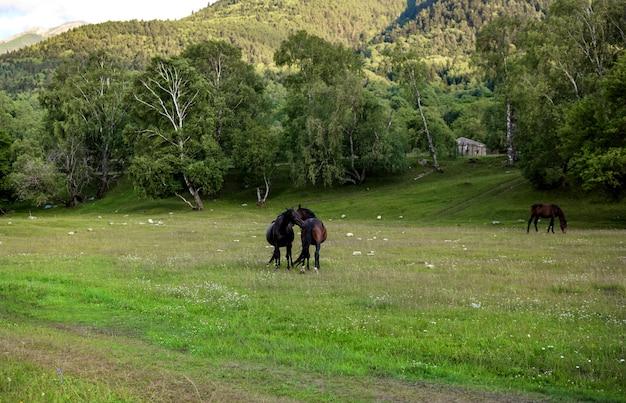 Лошади обнимаются на природе.