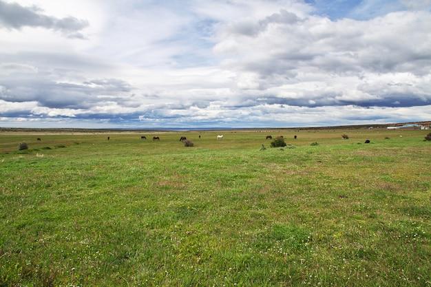 パタゴニアのフィールドの馬