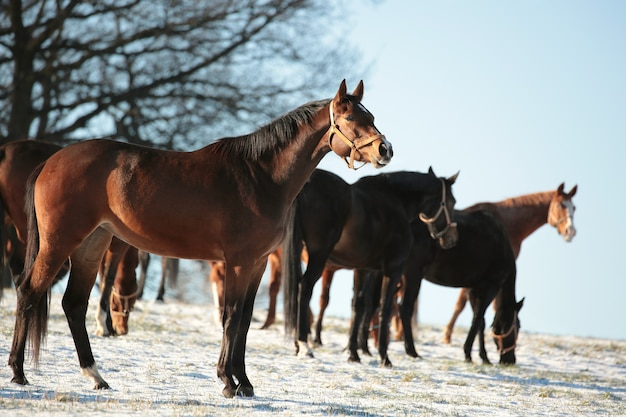 秋の木々を背景に牧草地の馬