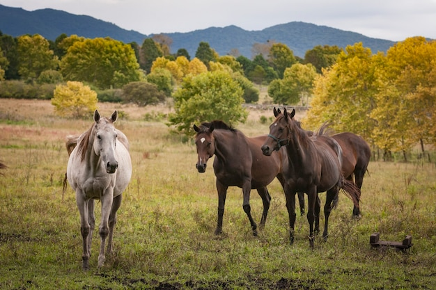 Лошади в открытом травяном поле