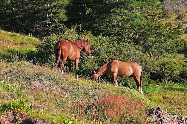 Лошади в деревне эль-чалтен в патагонии аргентины