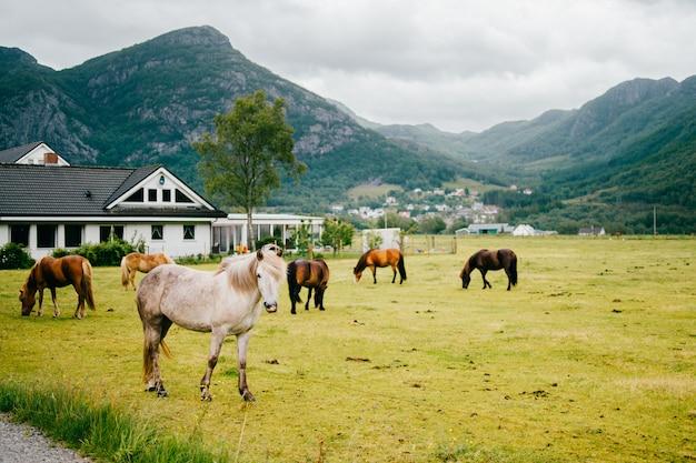 Лошади в сельской ферме