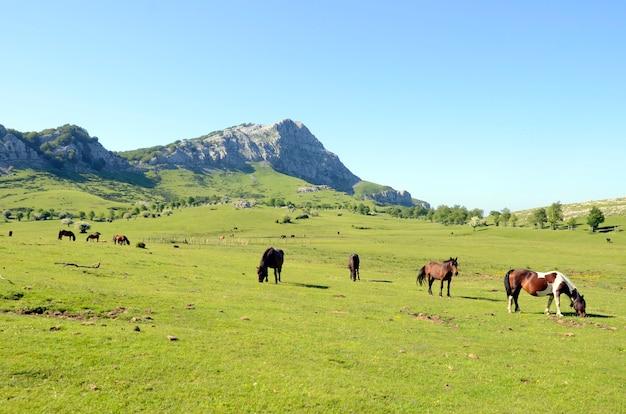 バスク地方のゴルベア自然公園のアラバ牧草地にいる馬。背景にはレカンダ山が見えます