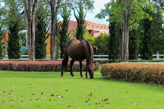リゾートガーデンの緑の畑の馬