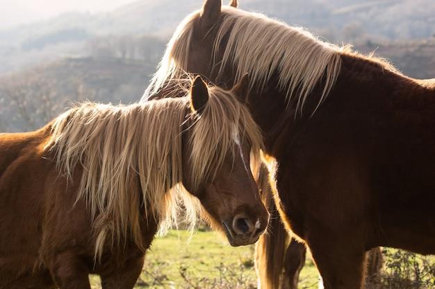 Лошади в горах с дневным светом