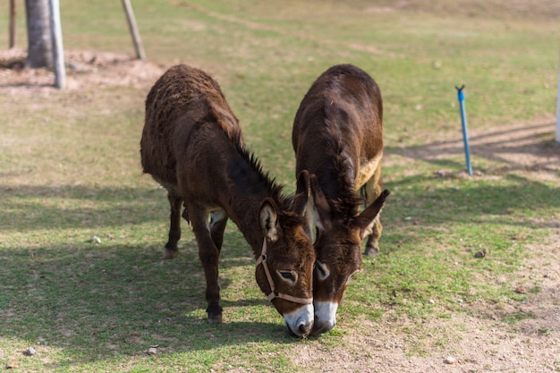 Лошади в зоопарке