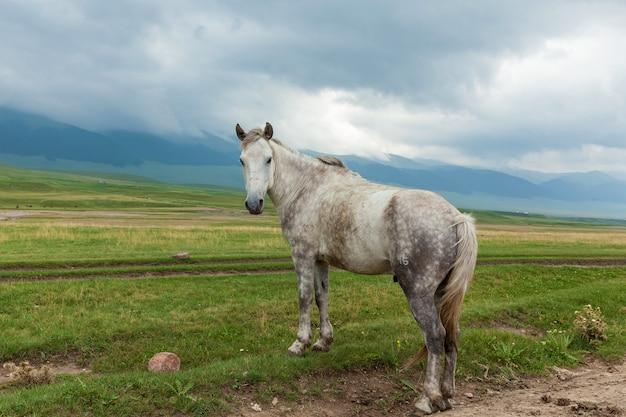 Интересная роспись лошадей стоит на пастбище и смотрит в сторону, дикая природа казахстана.