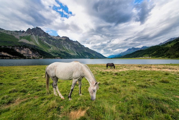Horses in a large meadow near a lake in the mountains