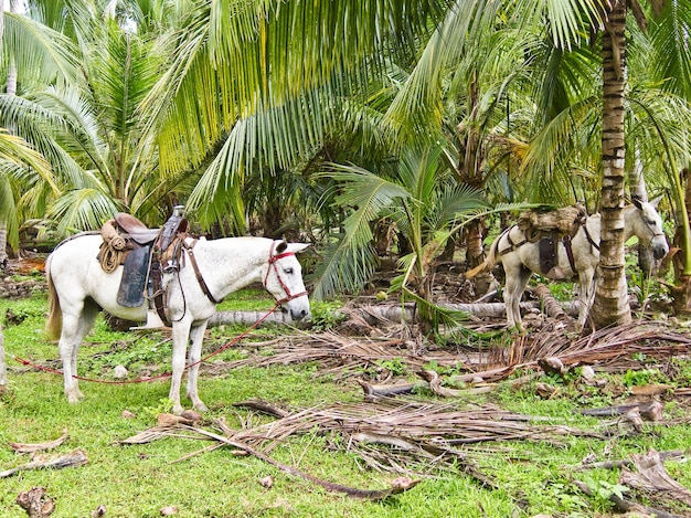 Horses natural park colombia