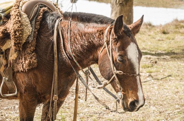 クレオールの馬は農場で繁殖します。