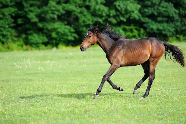 夏の日の牧草地の馬