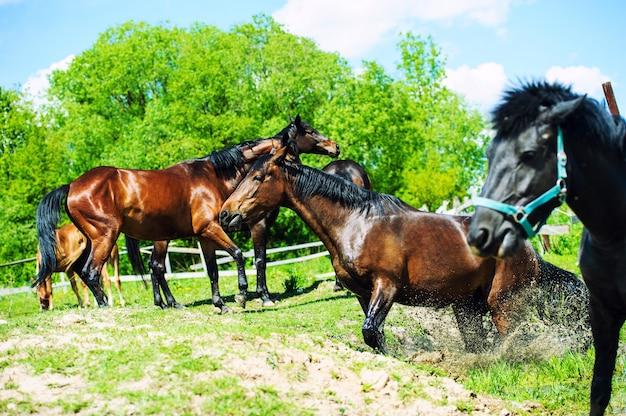 夏の牧草地の馬