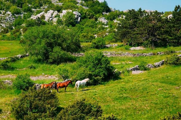 Лошади на лугу в горах черногории