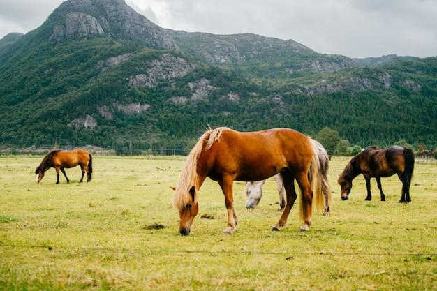 Лошади пасутся в поле с горами