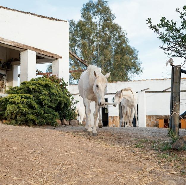 農場で自由に歩き回る馬