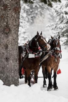 Horses running on forest
