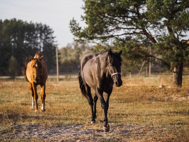 秋の野原を走る馬