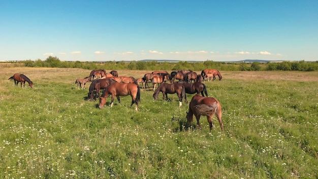 馬は緑の牧草地に立ち、農地の草を放牧します