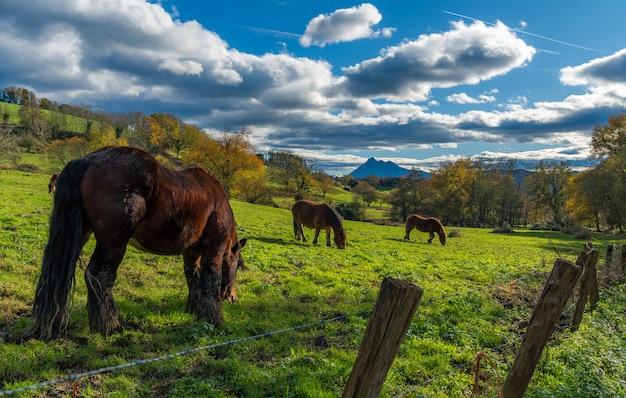 Horses standing in the sun in berriz neighborhood