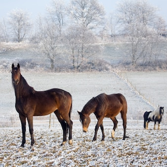 Horses surrounded at a snowy field