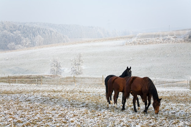 Horses in a winter landscape