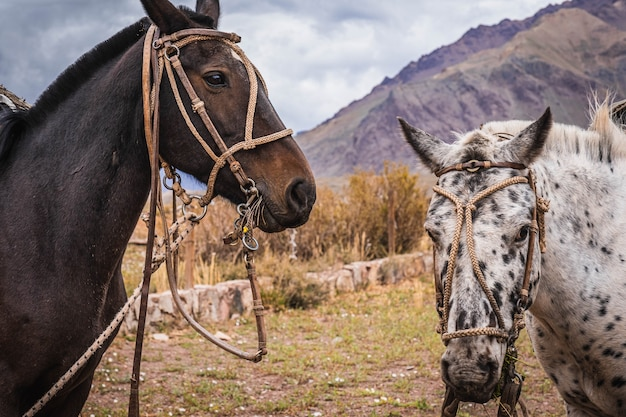 背景の山を持つ馬。セレクティブフォーカス。