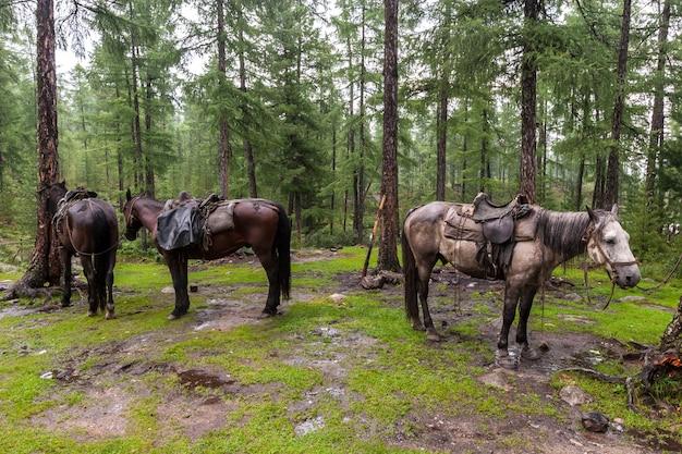 Лошади с седлами, привязанные к деревьям в дождливую погоду Premium Фотографии