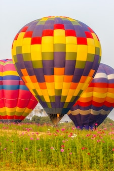 Hot air balloons floating over cosmos flowers field