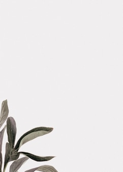Houndstongue leaves white background text space