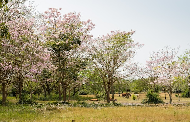 Hourses in green field with pink trumpet blossom