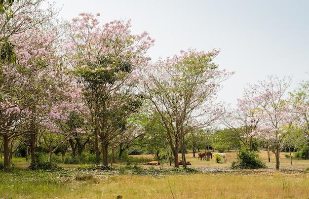 Hourses в зеленом поле с розовым цветением трубы