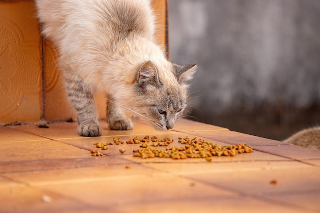 House cat face crouched down eating feed on the floor
