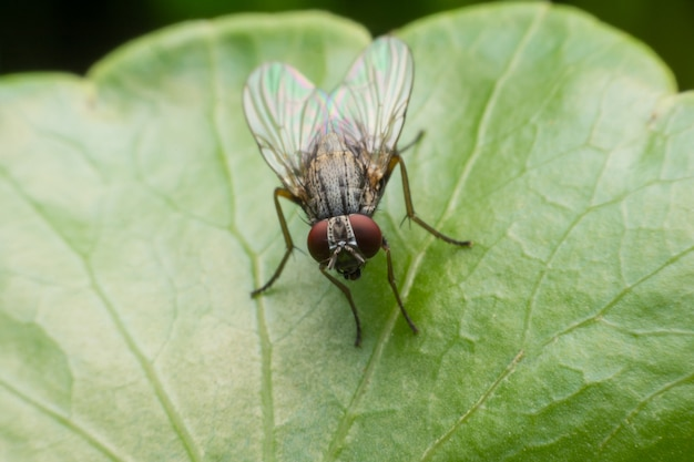 House fly in extreme close up sitting on green leaf.