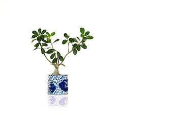 House green plant isolated in white background.